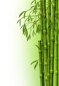 Бамбуковая роща, фон из стеблей бам